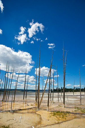 Dead Trees in Hot Spring