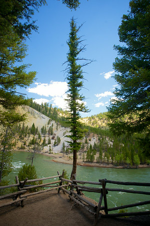 Single Tree at Overlook