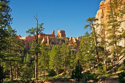 Forest of Pines Beneath Orange Hoodoos