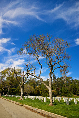 Roadside Trees in Memorial Cemetery