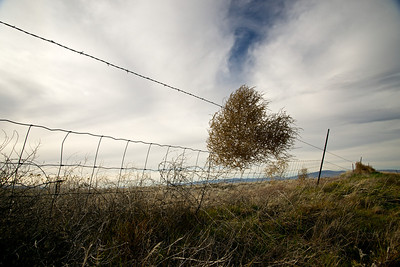 A barbedwire fence snatches a single tumbleweed from the air and latches onto it.