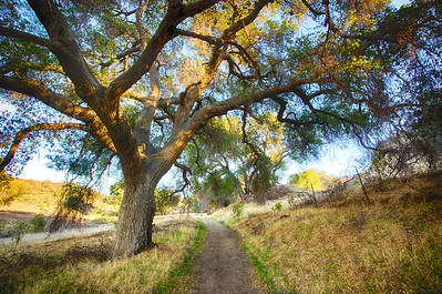Path to the Ranch