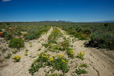 Wildflowers grow on a dirt road leading into the wilderness of Idaho.