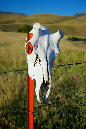 Deer Skull on Fence