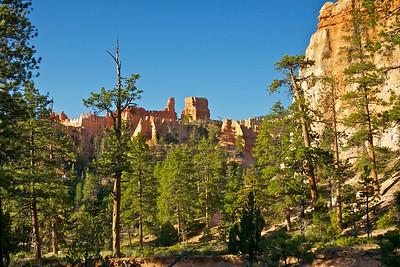 Forest of Pines Beneath Orange Hoodoos