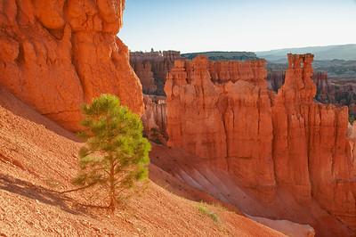 Tree on Bryce Canyon Edge