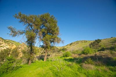Hillside Meadow