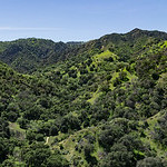 California Woodland Valley
