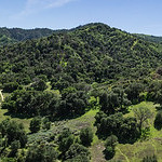 Southern California Hills and Forest