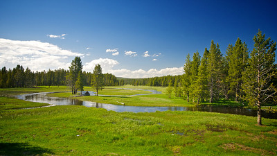 A stream flows through a meadow and wood in the region of Wyoming's Yellowstone National Park.